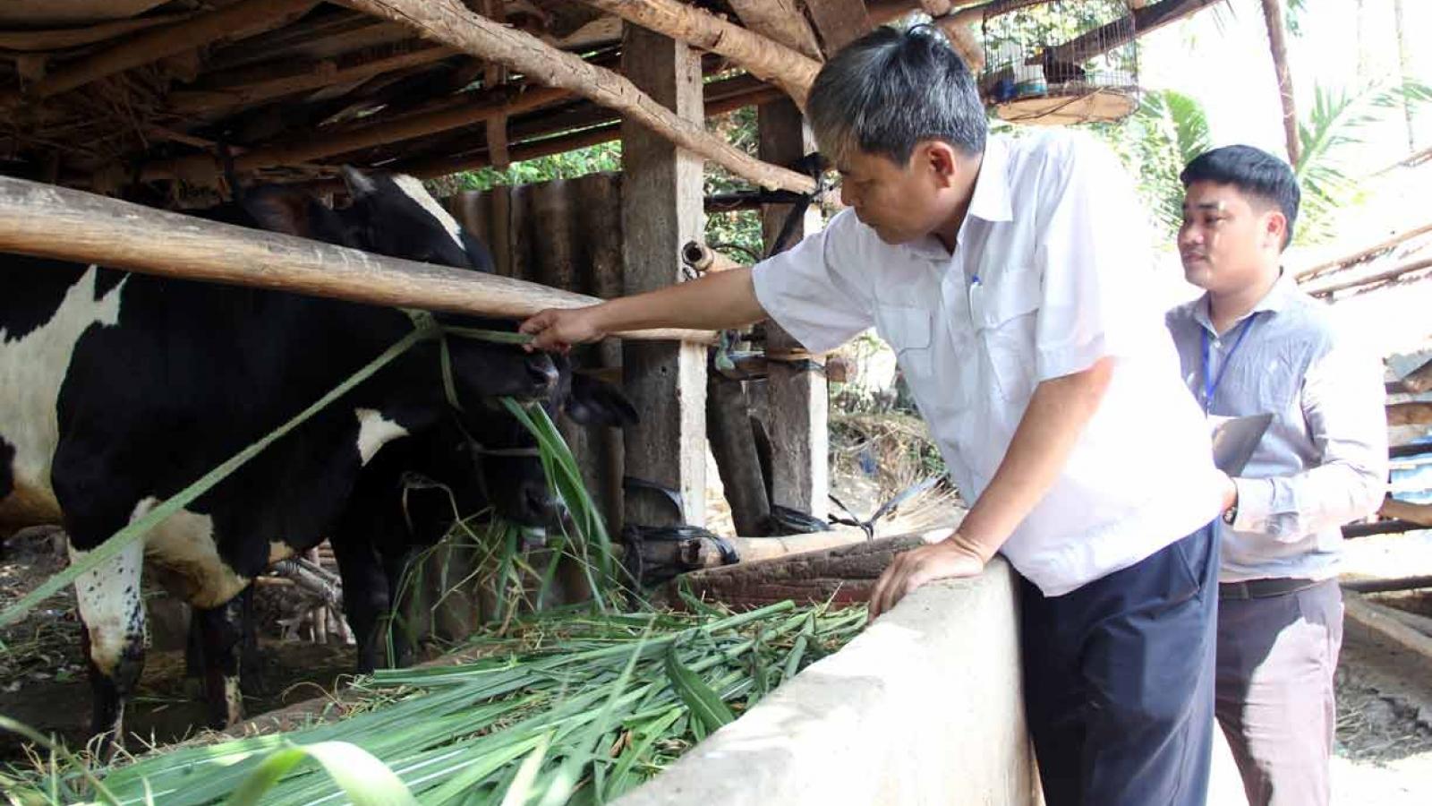 Dịch lở mồm long móng bùng phát ở Phú Yên do không tiêm vaccine