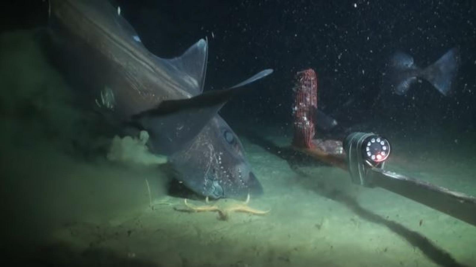 """Chiêm ngưỡng hình dạng """"độc nhất vô nhị"""" của những sinh vật dưới đáy đại dương"""