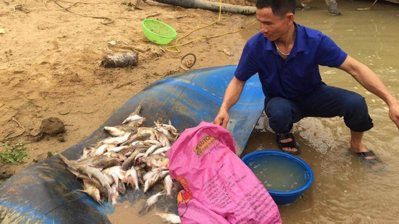 Nguyên nhân ban đầu khiến cá chết trắng xoá bất thường trên sông Con