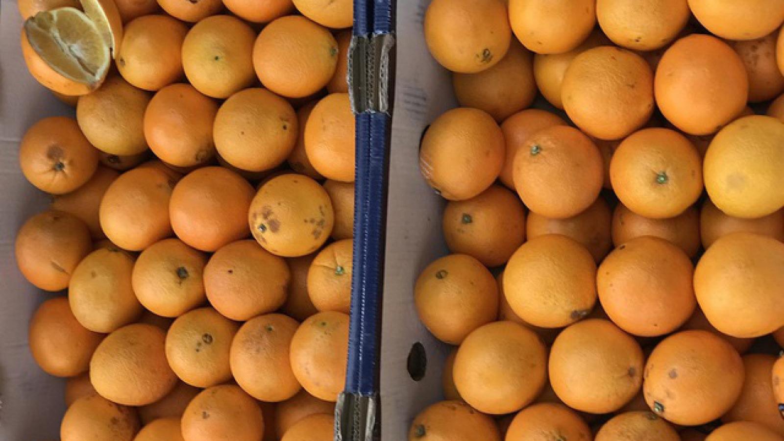Sự thật về cam Úc siêu rẻ bán đầy vỉa hè Hà Nội