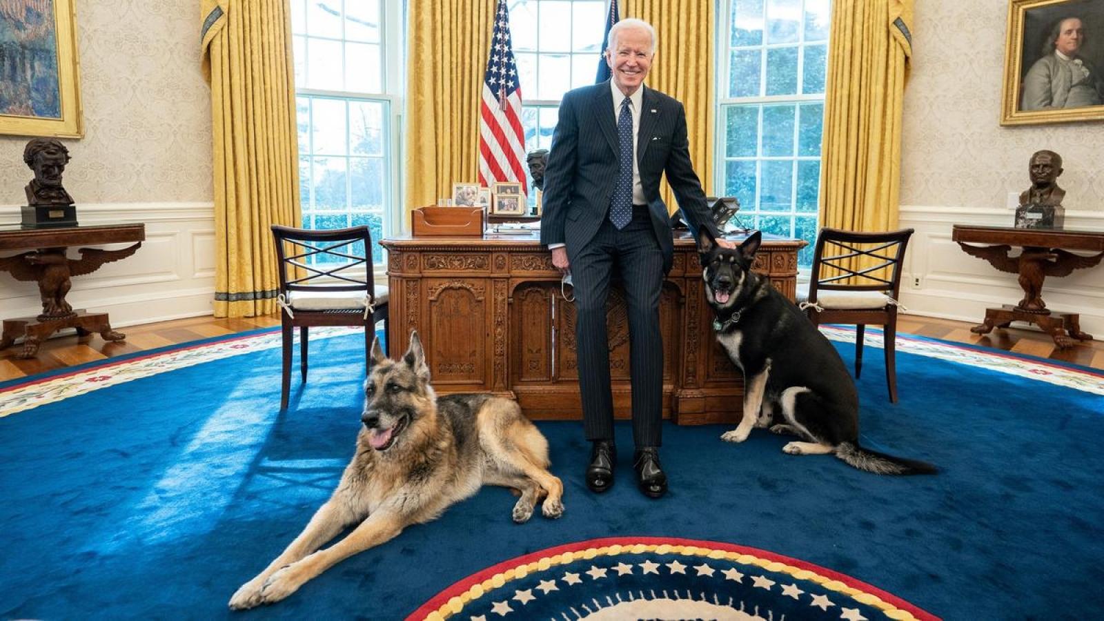 Chó cưng của Tổng thống Mỹ Biden bị đưa về quê vì cắn mật vụ