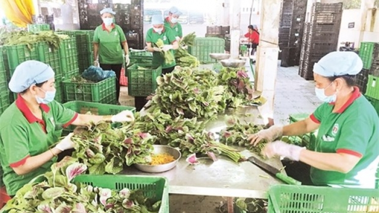 Cooperatives struggle to access COVID-19 support