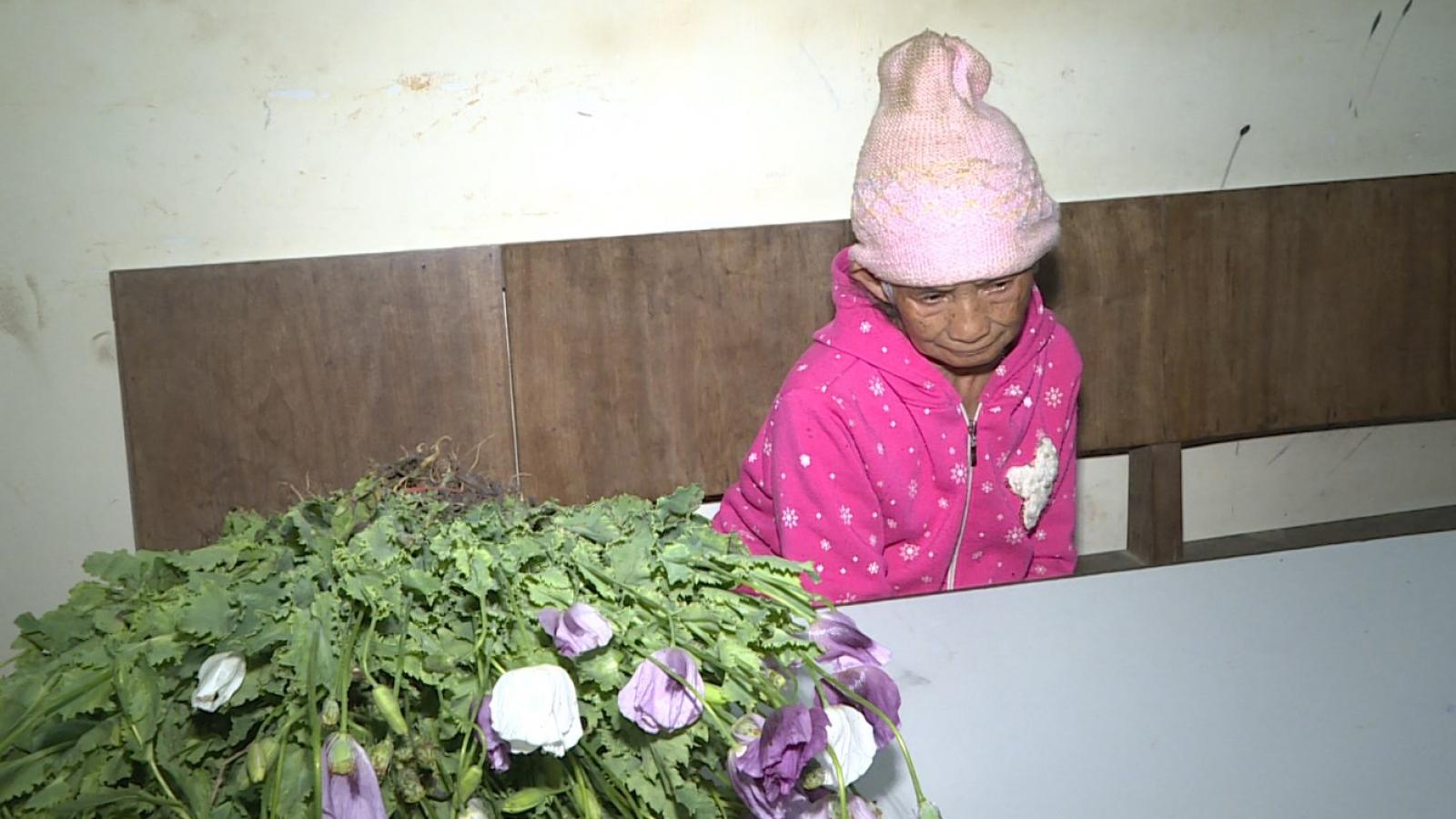 Nóng 24h: Phát hiện đối tượng 86 tuổi trồng 200 cây thuốc phiện trên nương