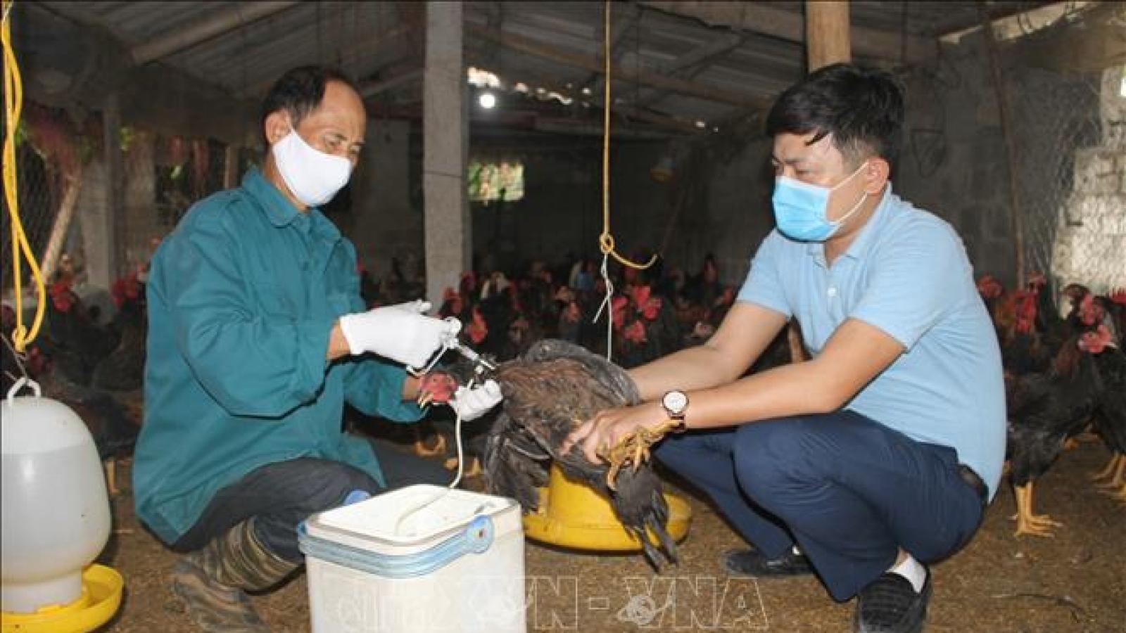Tổ chứcFAO và (WHO) kêu gọi Việt Nam cảnh giác với cúm gia cầm H5N8