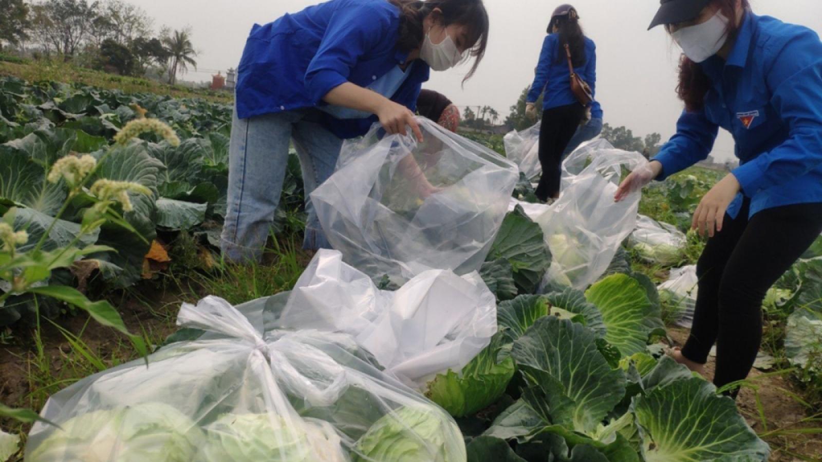 Giải cứu nông sản: Sự lúng túng giữa chống dịch và phát triển kinh tế