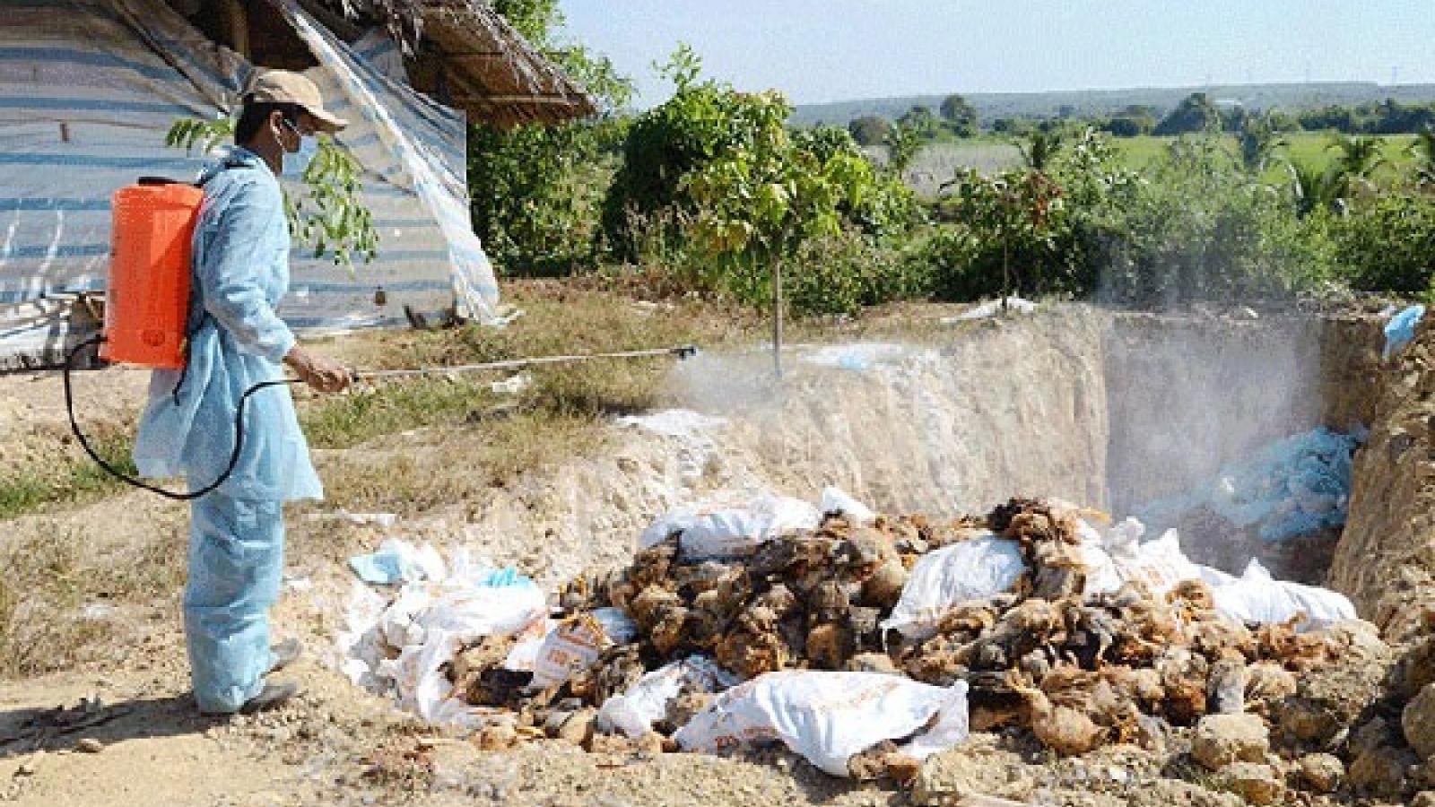 Hanoi culls 4,979 poultry in an effort to stem bird flu outbreak