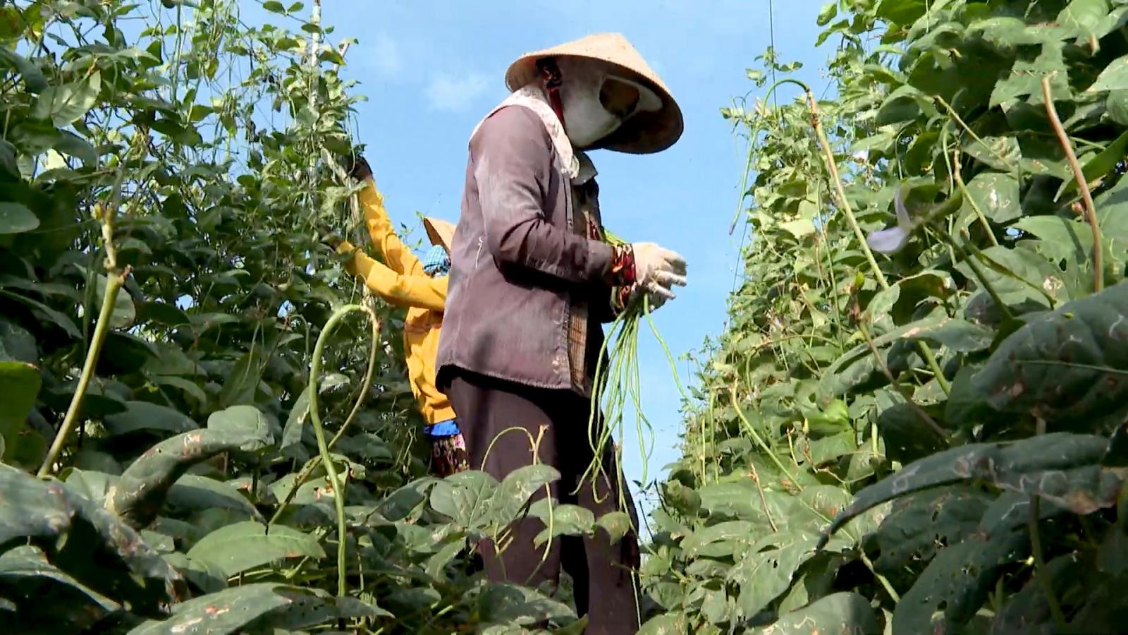 Phân bón tăng giá doanh nghiệp lẫn nôngdâncùng gặp khó
