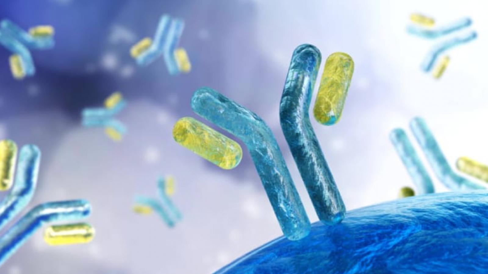 Phát triển kháng thể kép có khả năng chống lại đột biến virus SARS-CoV-2