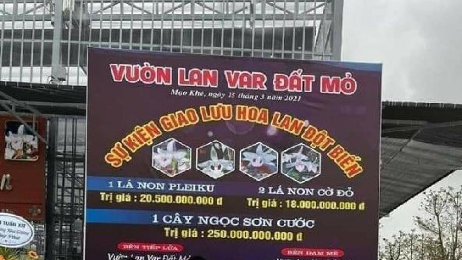 Làm rõ vụ mua bán lan đột biến lên đến hàng trăm tỷ đồng tại Quảng Ninh