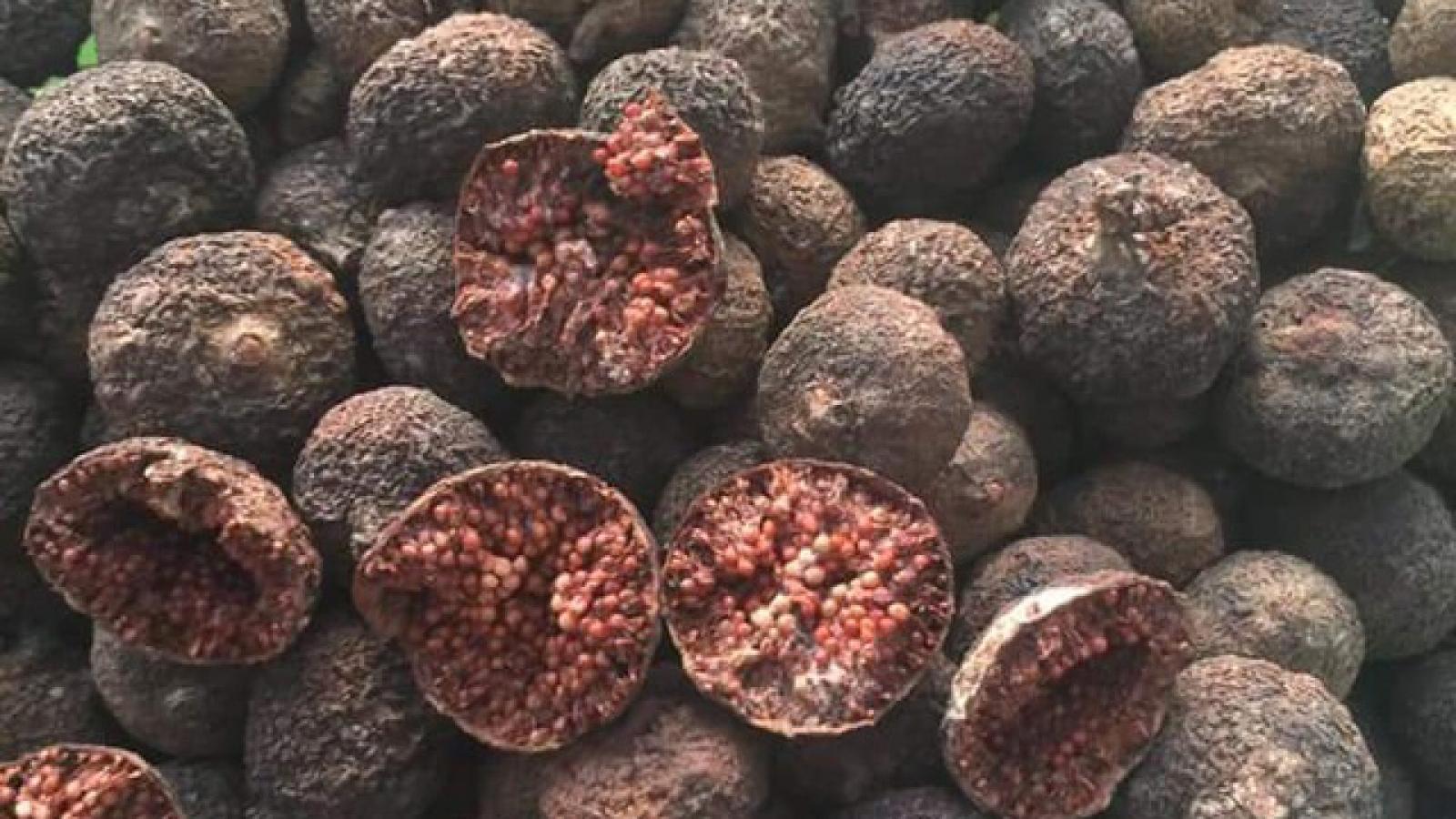 Loại quả rụng đầy bờ ao quê, nay bán giá đắt đỏ