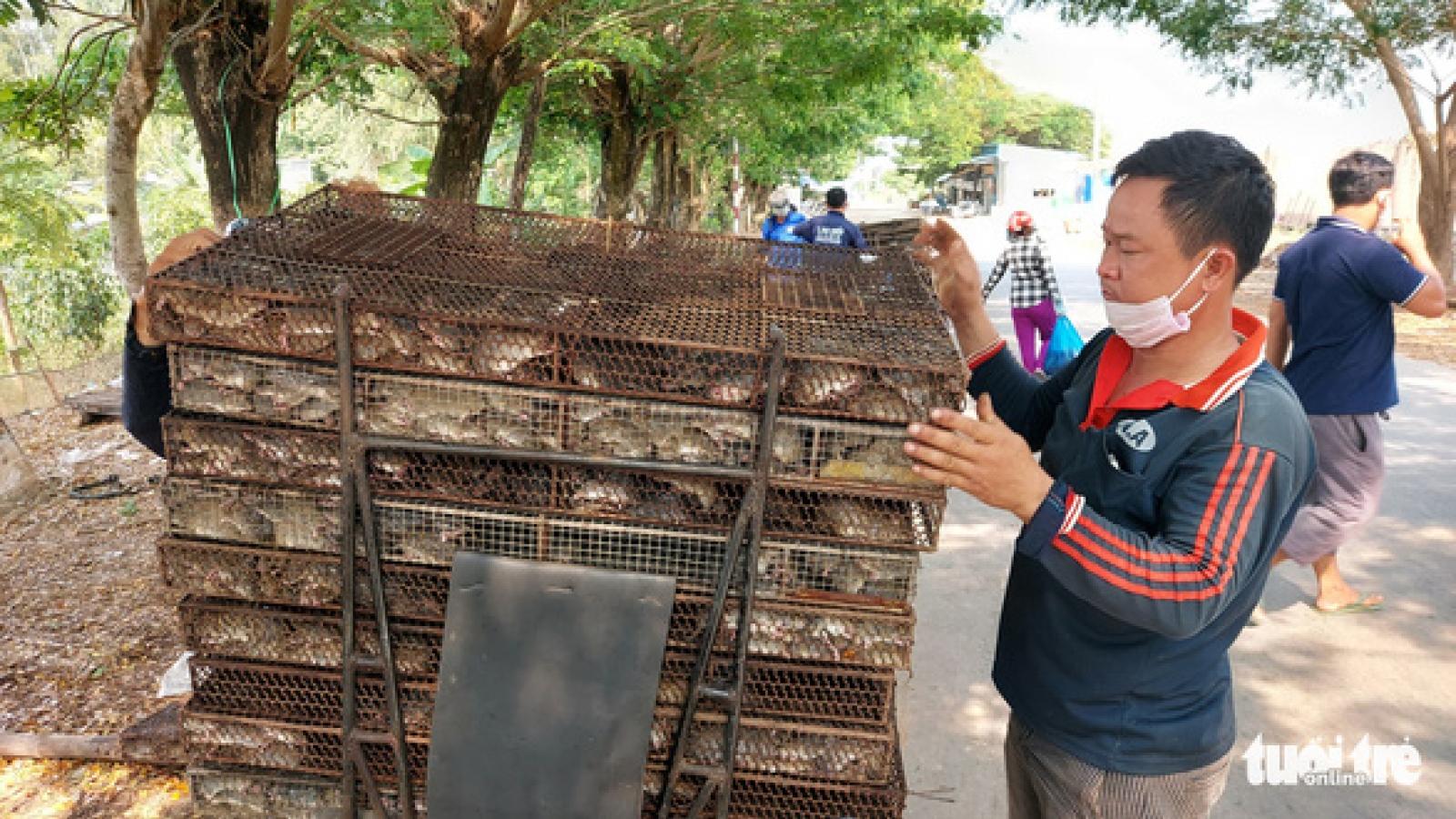Nhộn nhịp chợ chuột đồng nơi biên giới: Mua bao nhiêu bán hết bấy nhiêu