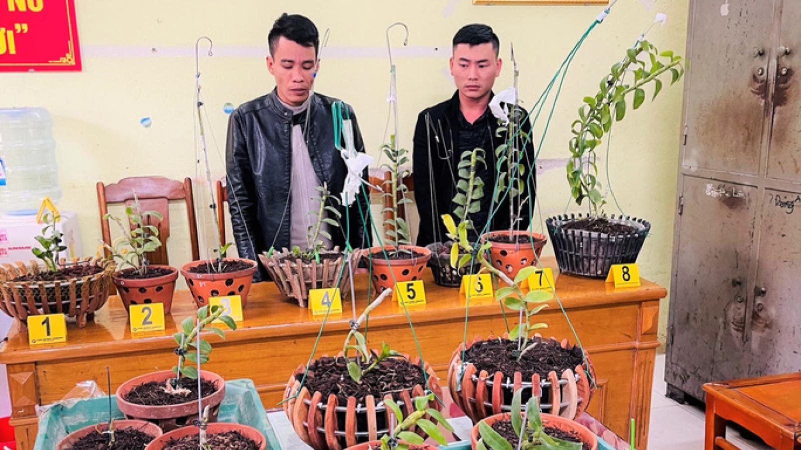 Đi ôtô tới Thanh Hóa trộm hoa lan đột biến giá trị 1,8 tỉ đồng