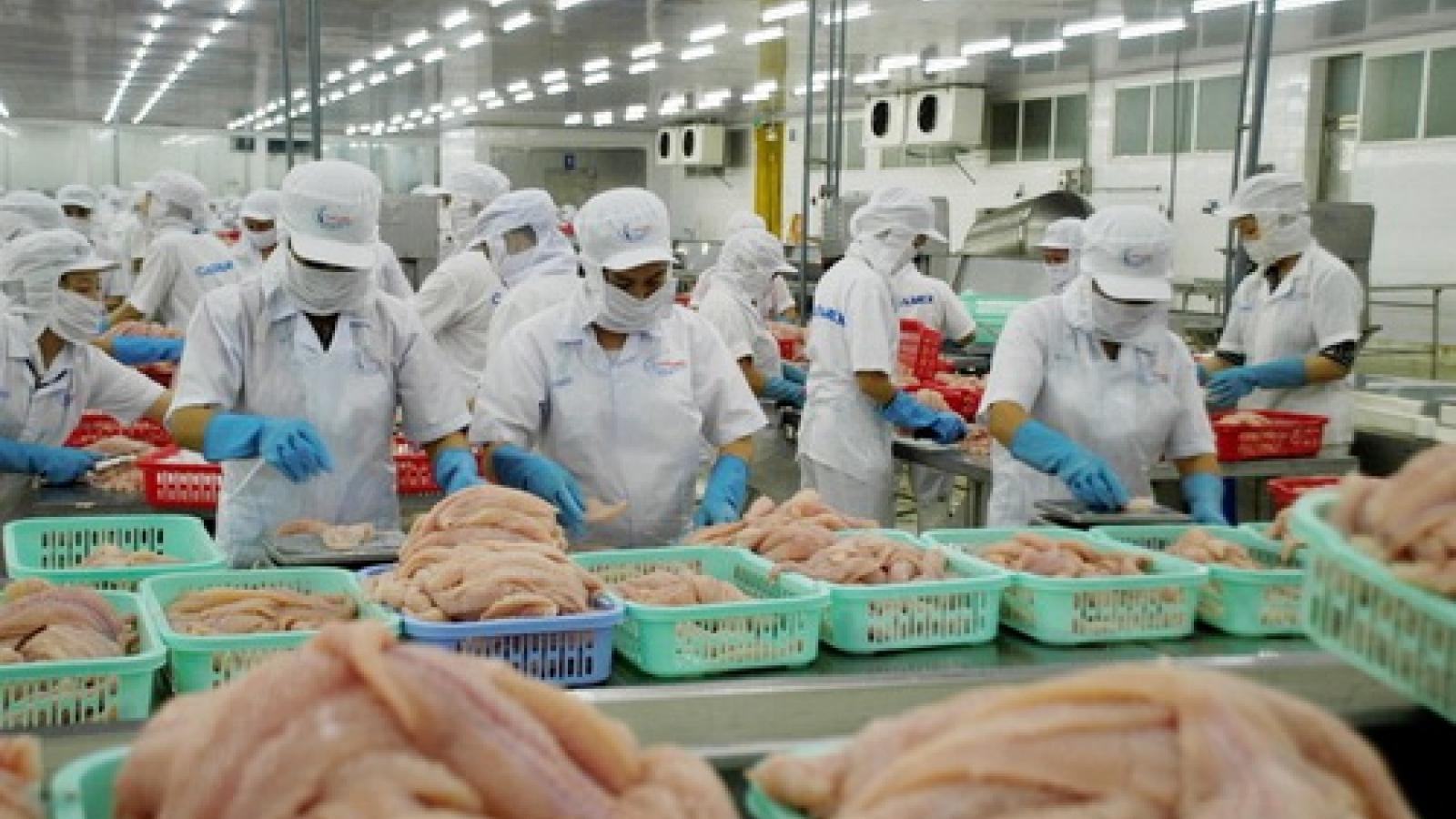 Pangasius exports to China suffer sharp drop