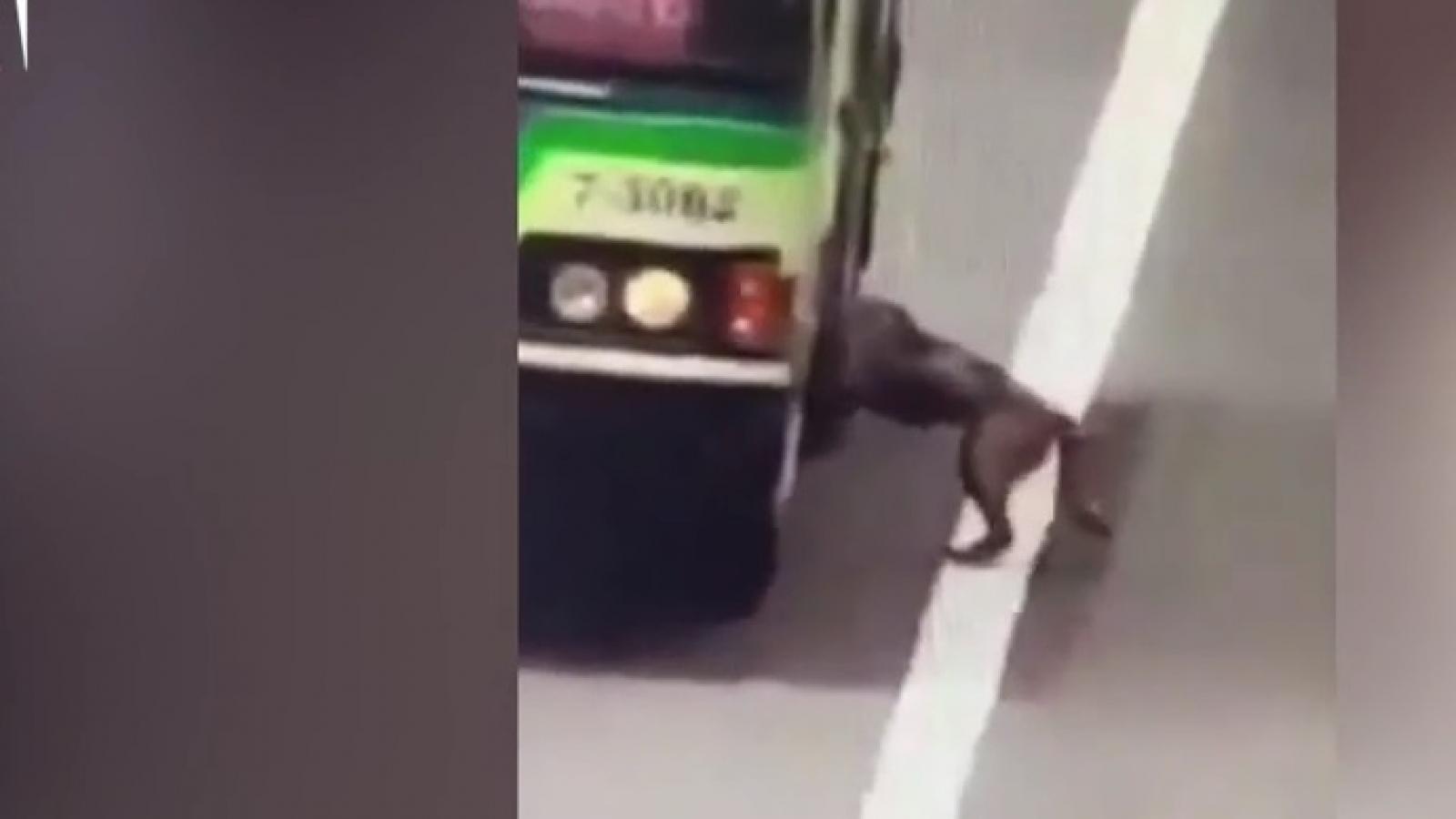 Ấm lòng cảnh tài xế xe bus dừng xe để đón một chú chó bị lạc