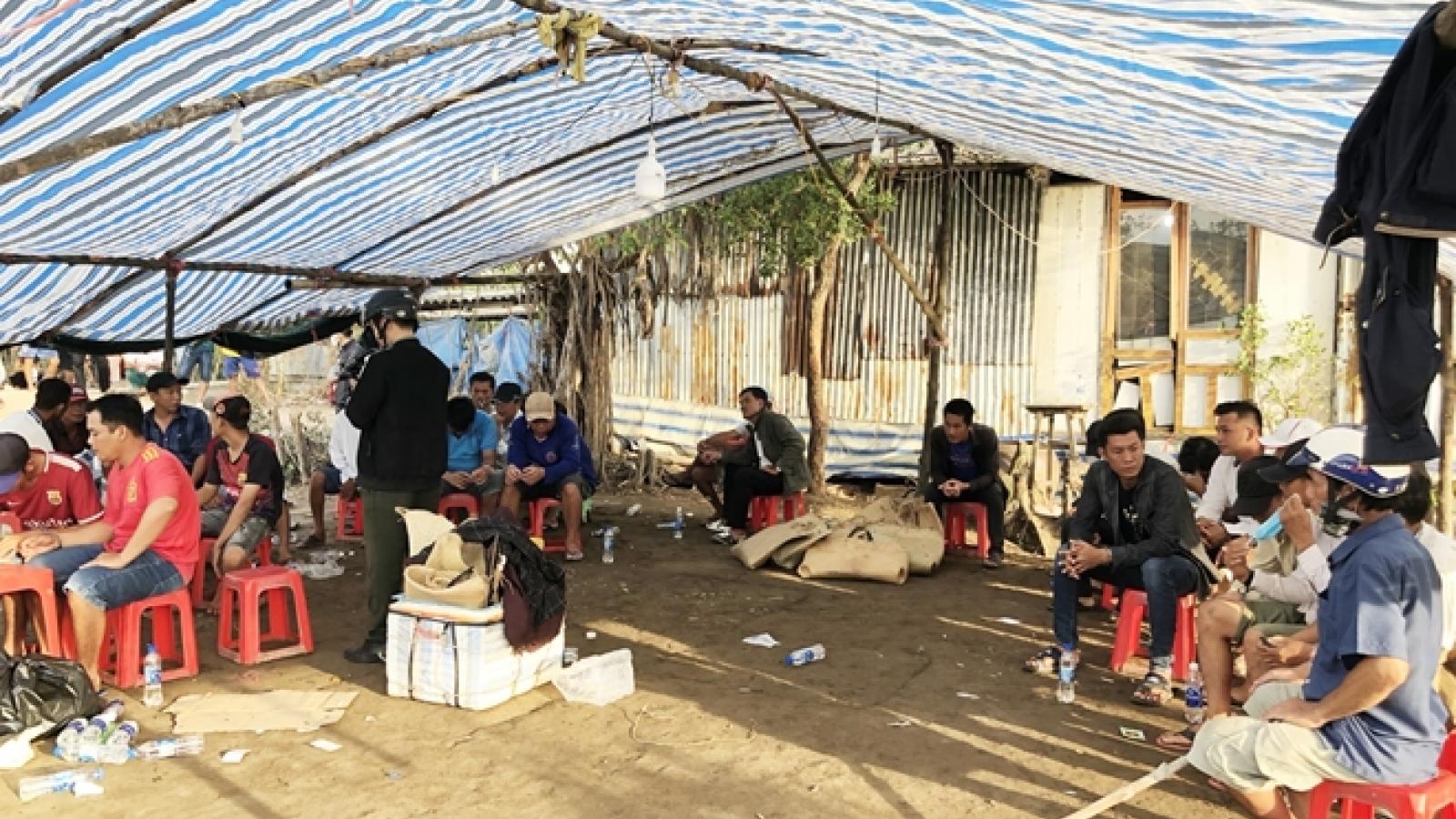 Triệt phá 2 trường gà quy mô lớn tại Bạc Liêu và Cà Mau