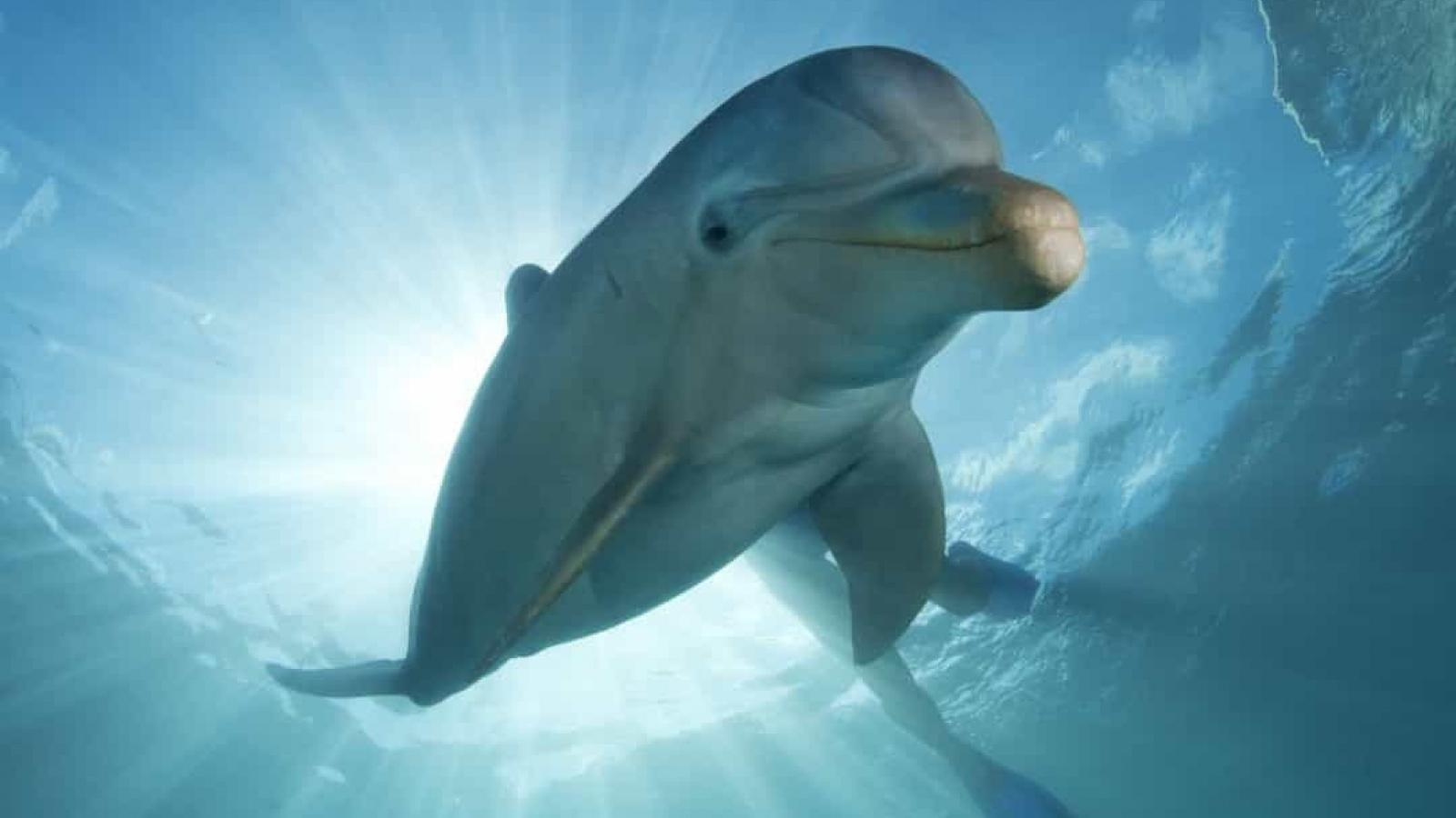 Bất ngờ với những sự thật thú vị về cá heo