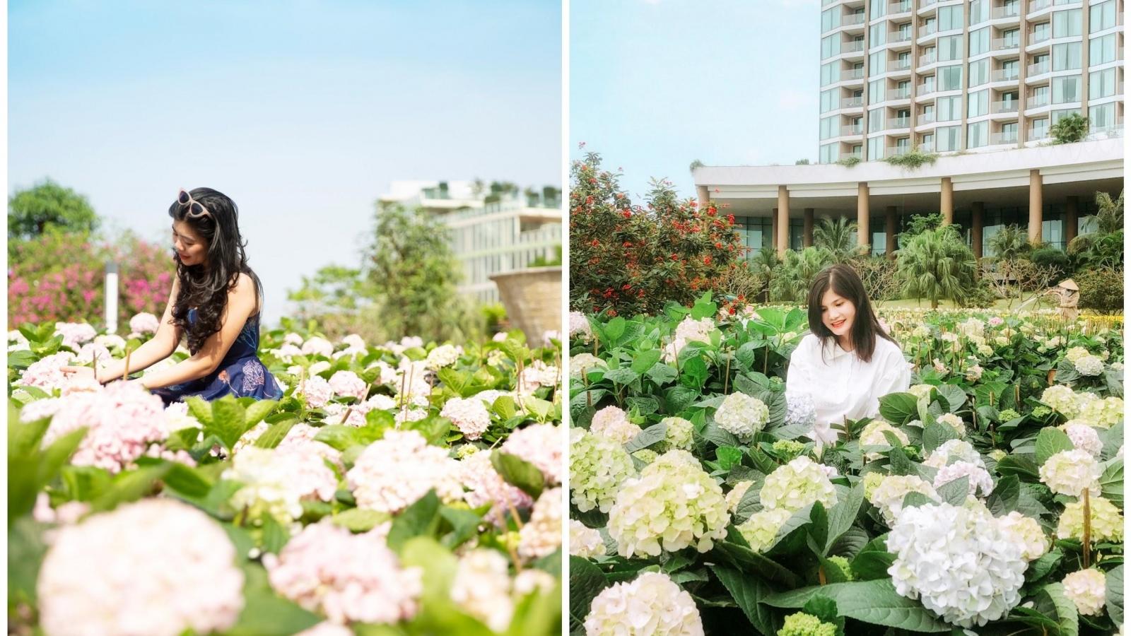 Check in con đường hoa đẹp ngây ngất tại lễ hội hoa Sầm Sơn