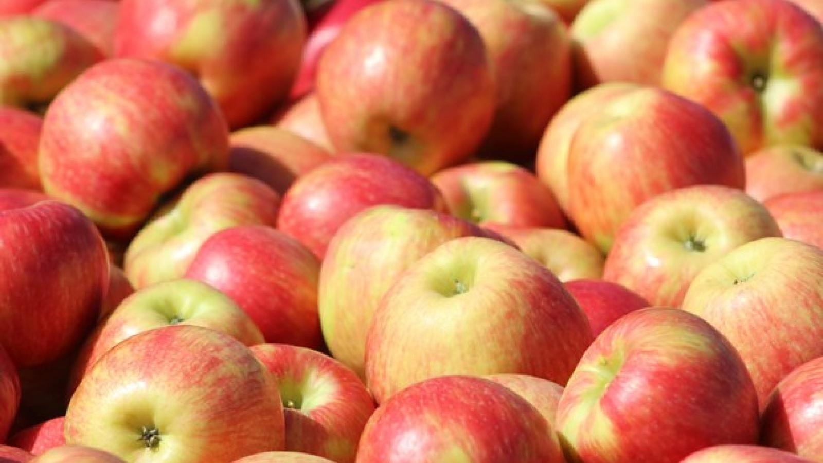 Việt Nam không bị ảnh hưởng bởi lệnh cấm nhập 13 loại trái cây của Algeria