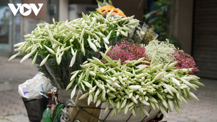 Hanoi welcomes romantic atmosphere with lily flower blooming season