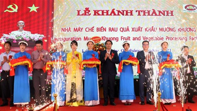 Large farm produce processing factory inaugurated in Lao Cai