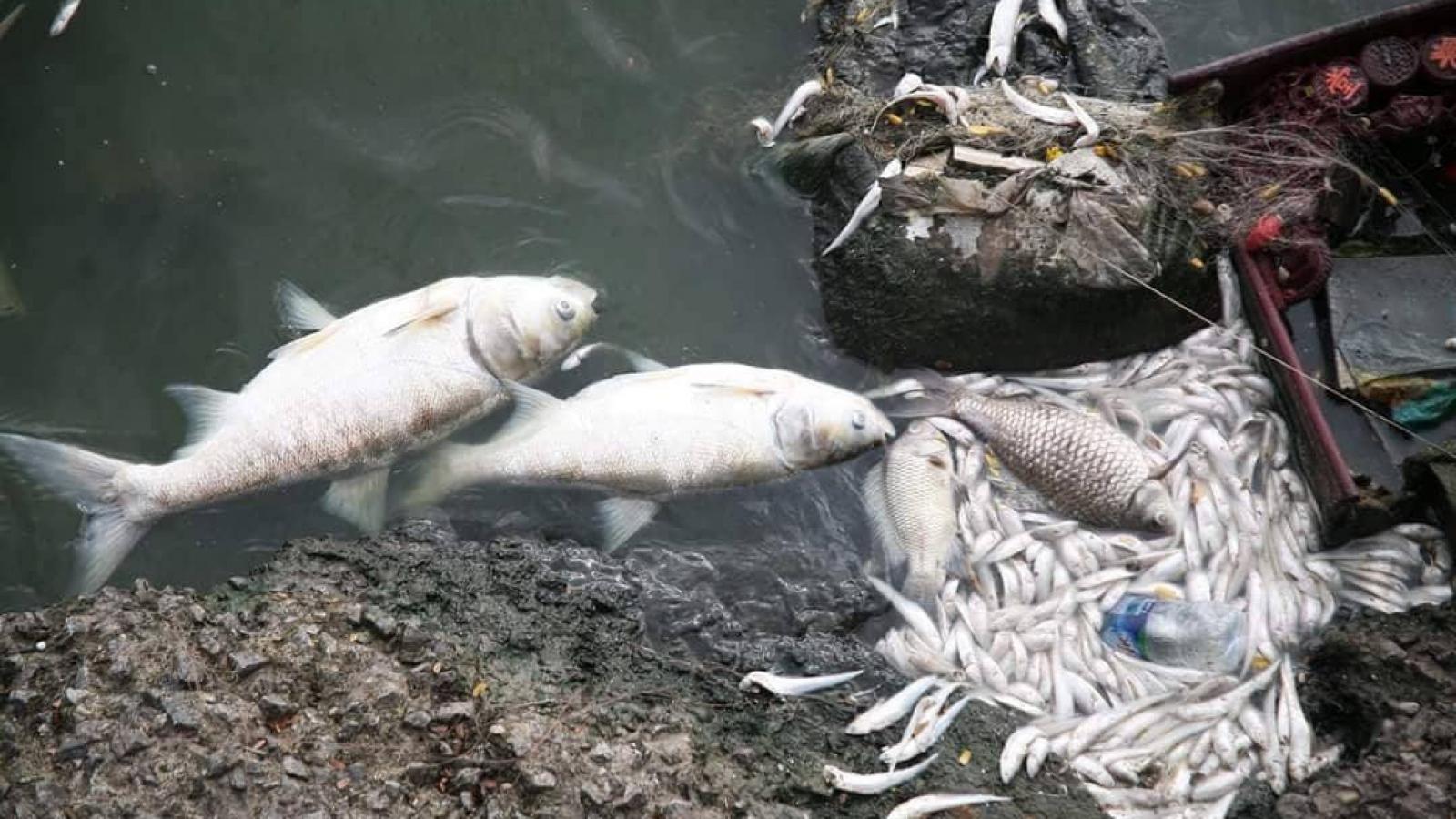 Cơ quan công an cần vào cuộc vụ cá chết ở vùng biển Thanh Hóa