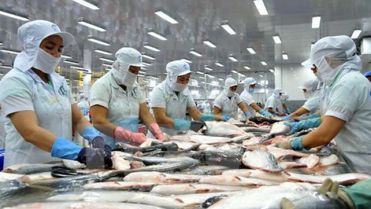 Pangasius exports increase by 0.6% in Q1