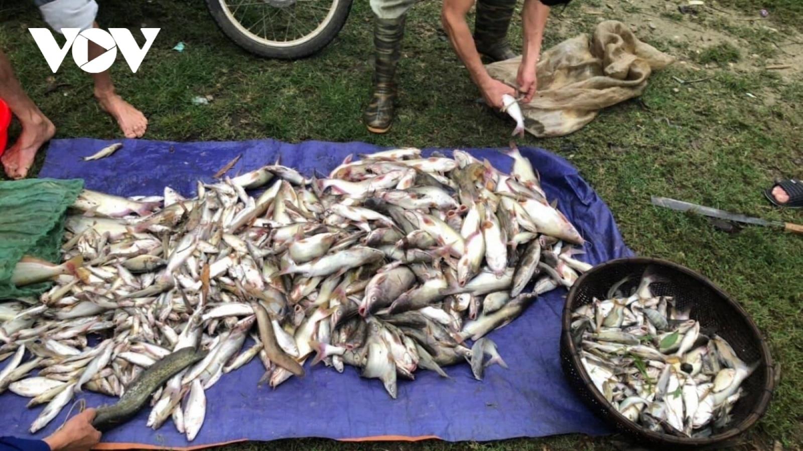 Cá chết trên sông Mã không phải do dịch bệnh