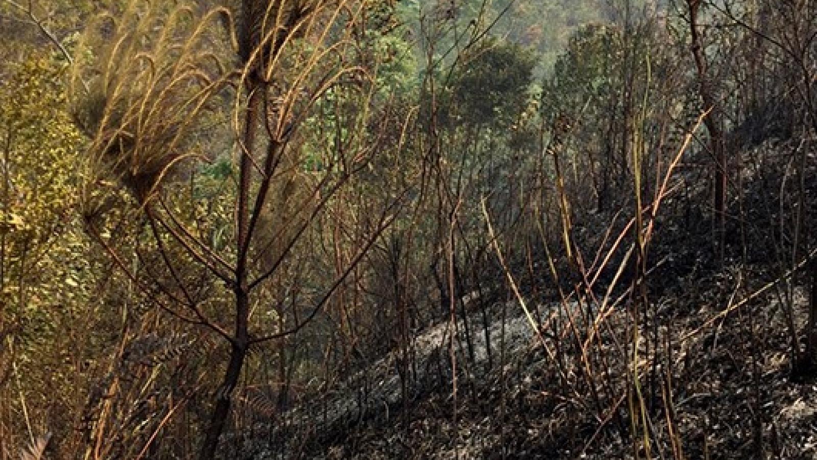 Liên tiếp xảy ra hai vụ cháy rừng ở Thuận Châu, Sơn La