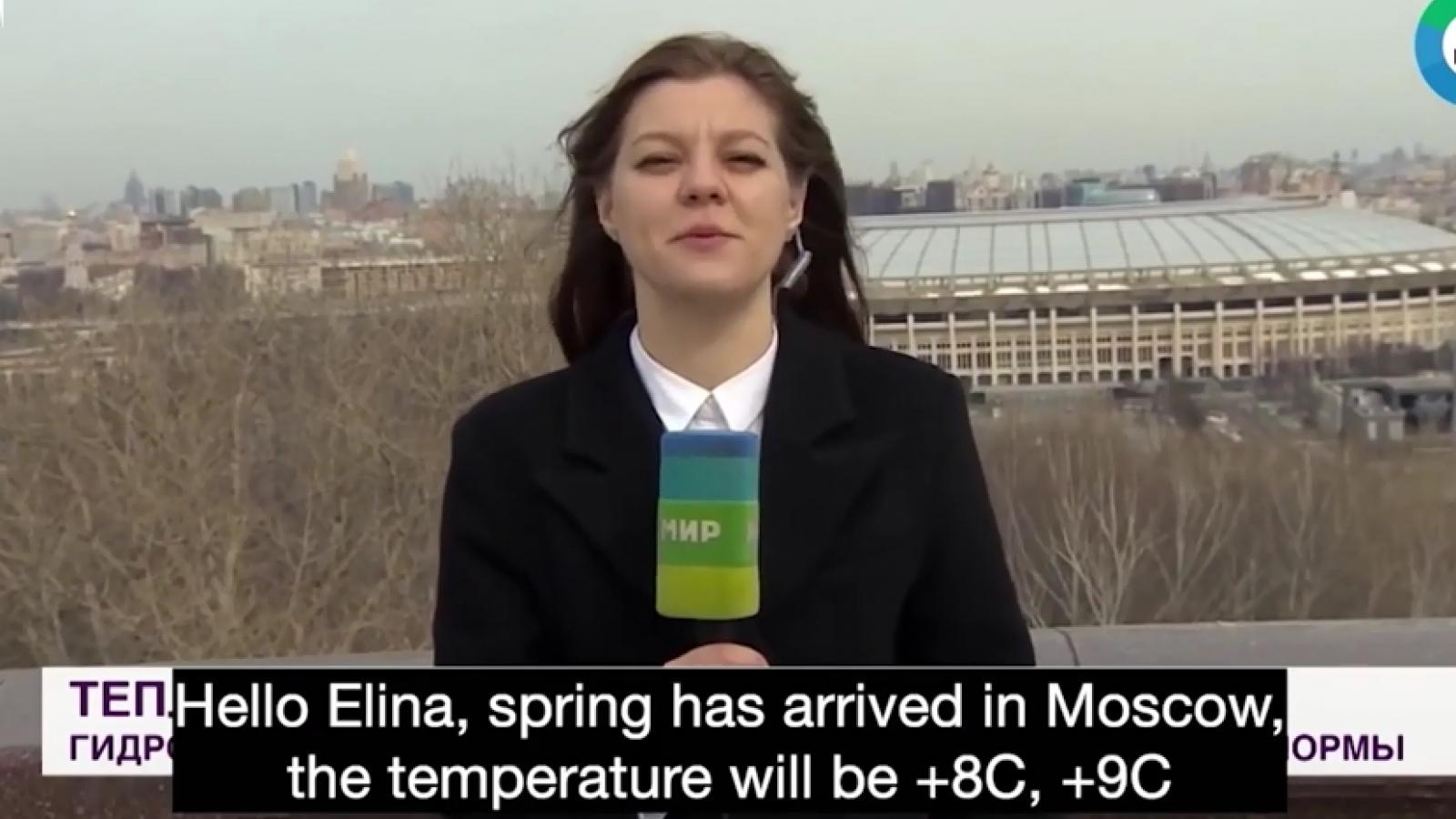Video: Chú chó đớp micro của phóng viên đang đưa tin trực tiếp