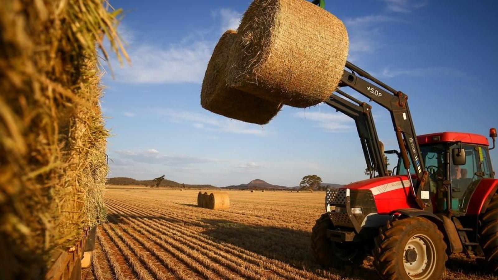 Cỏ khô Australia có thể là mặt hàng mới chịu sự trừng phạt từ Trung Quốc