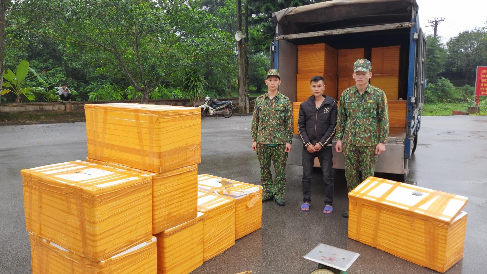 Quảng Ninh bắt giữ hơn 500kg cá tầm Trung Quốc nhập lậu