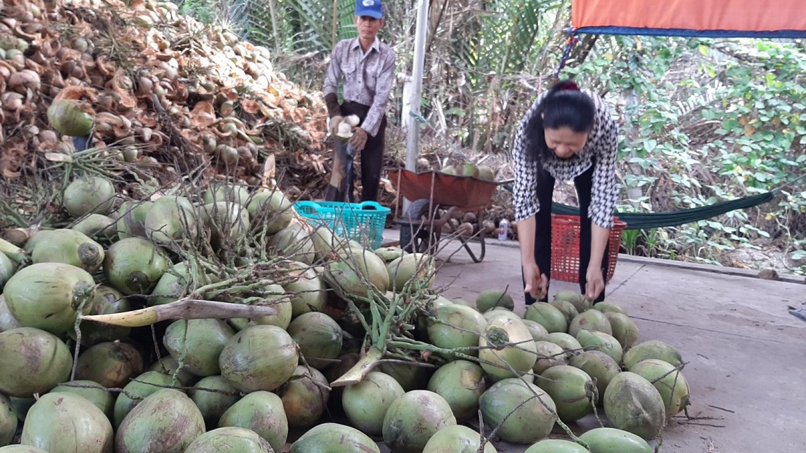 Cần nhân rộng diện tích dừa hữu cơ và sản xuất muối theo hướng liên kết gắn với thị trường