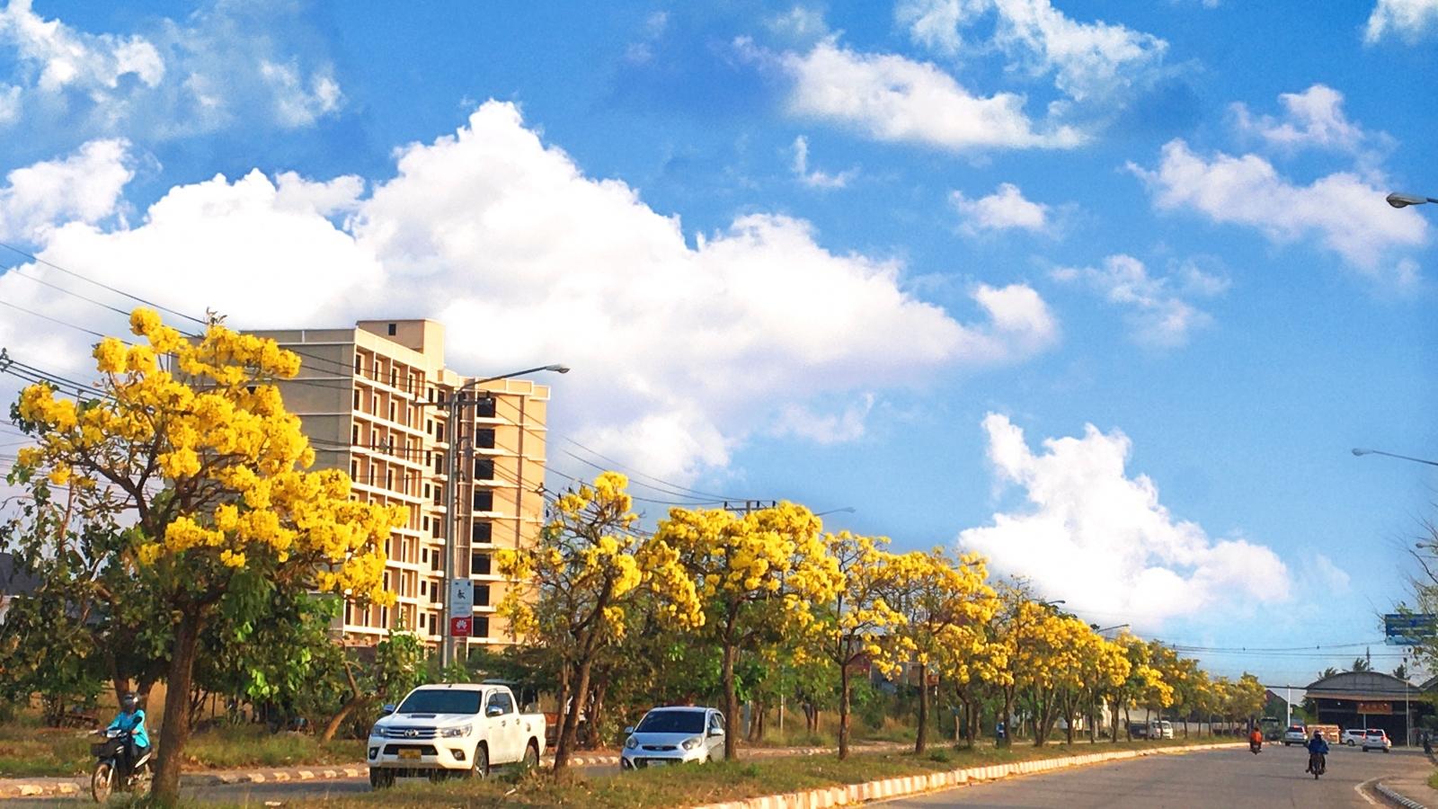 Ấn tượng với xứ sở trời xanh, mây trắng, hoa vàng