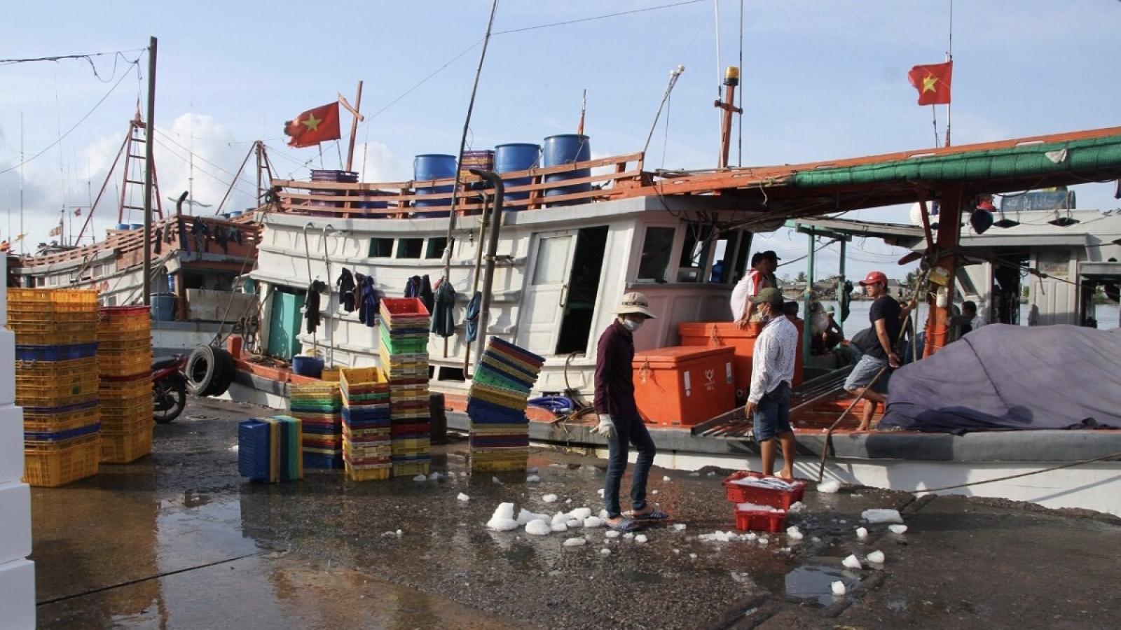 Bí thư Tỉnh ủy Bạc Liêu: Nâng cấp, mở rộng cảng cá Gành Hào phải làm nhanh