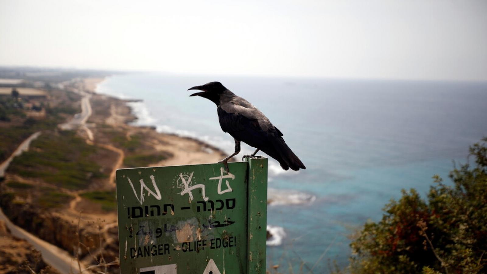 Lebanon và Israel nối lại đàm phán phân định biên giới trên biển