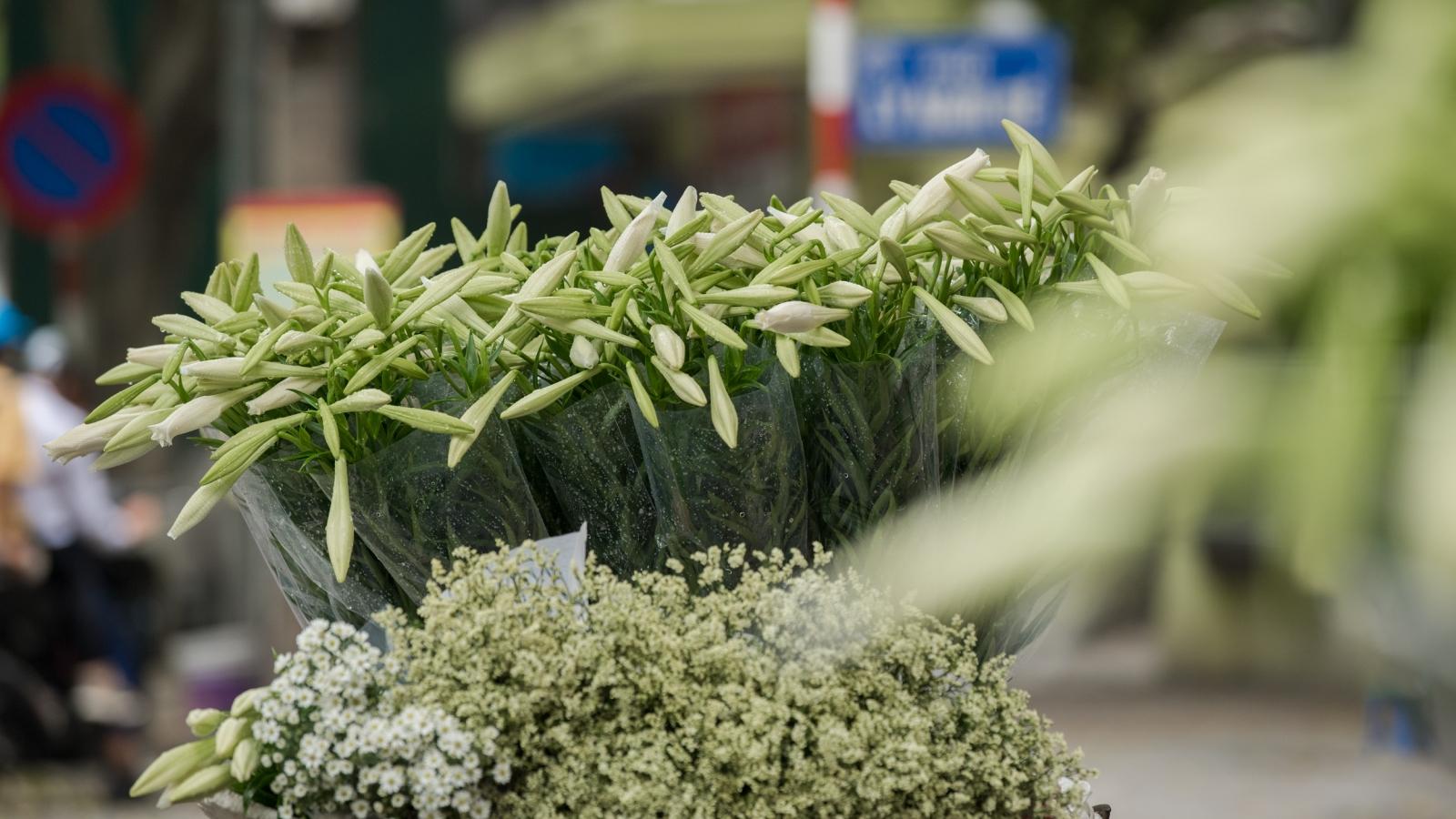 Mê mẩn sắc hoa loa kèn tinh khôi gọi tháng 4 về trên phố Hà Nội