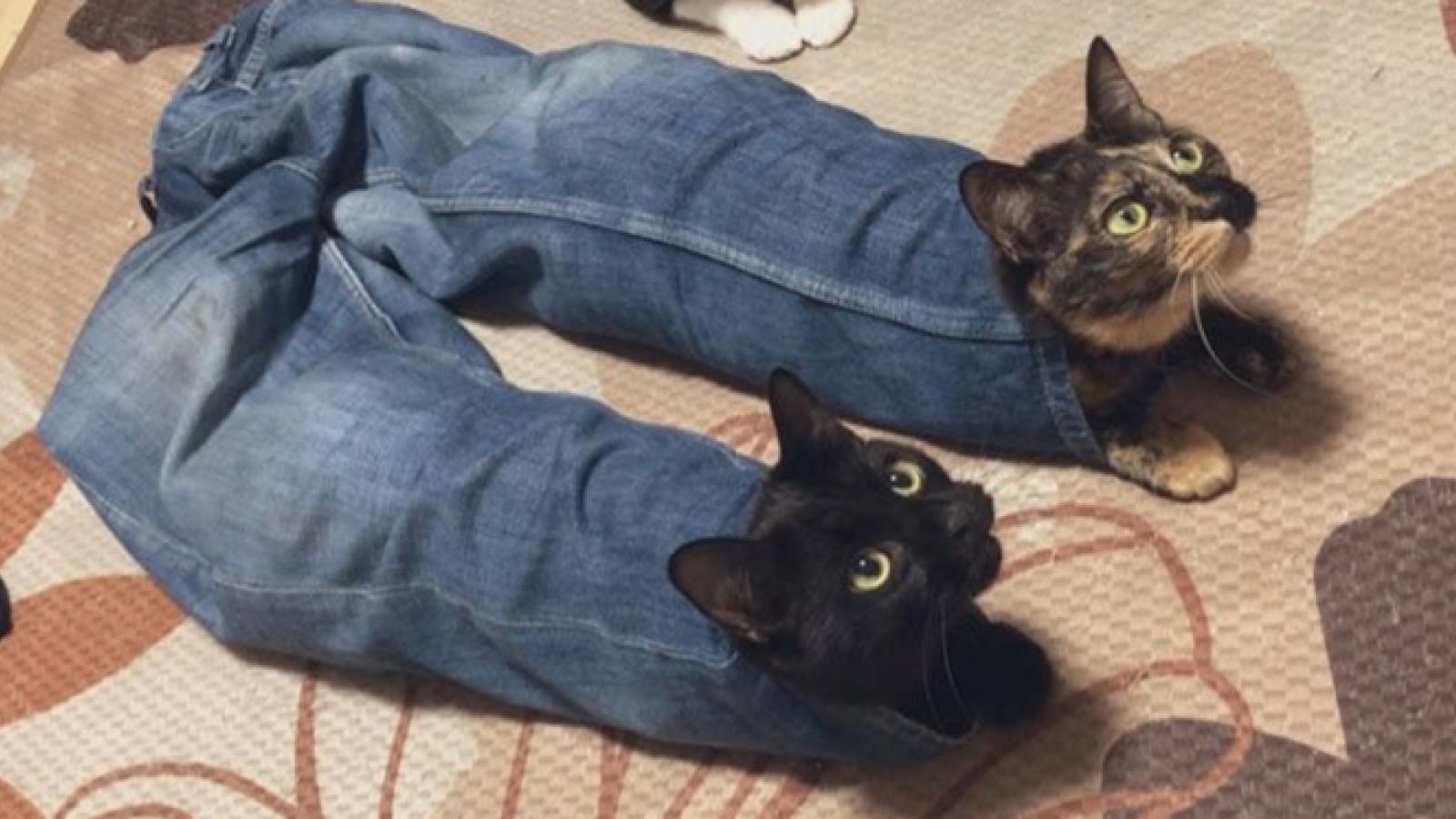 Thư giãn với chùm ảnh vui về những chú mèo