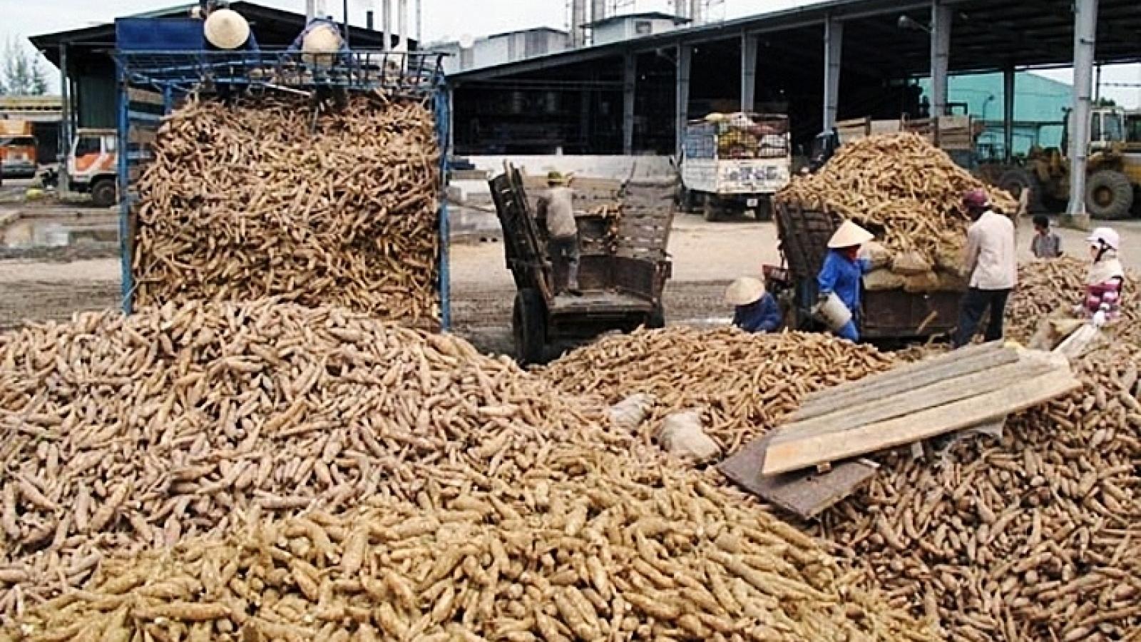 Cassava exports enjoy surge in Q1