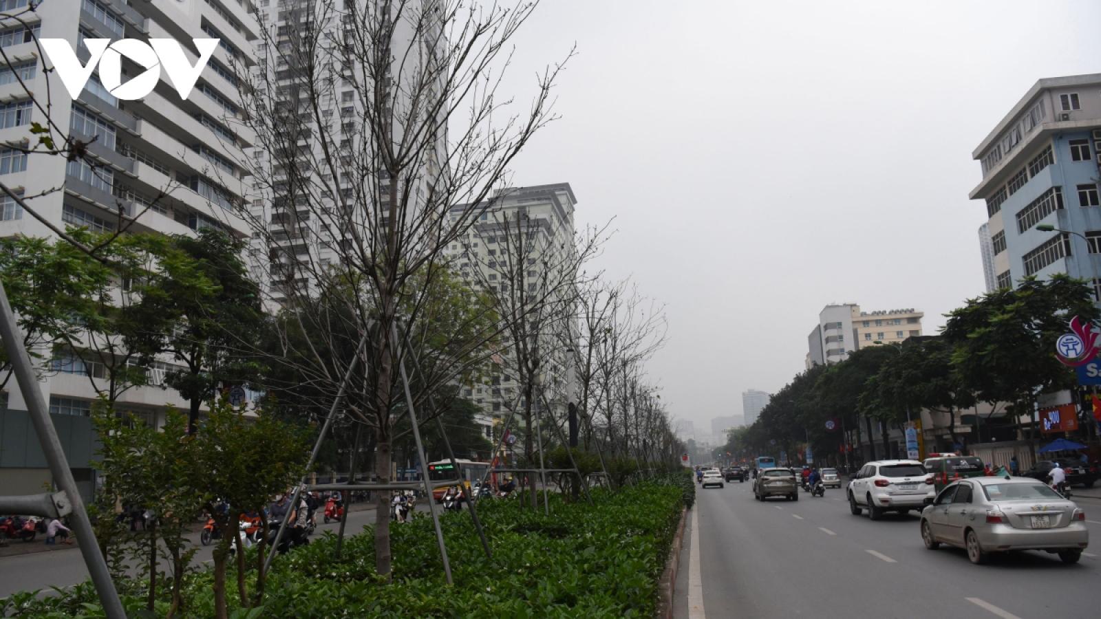 Phong lá đỏ ở Hà Nội chết yểu: Ý đồ tốt nhưng thực hiện quá vội vàng