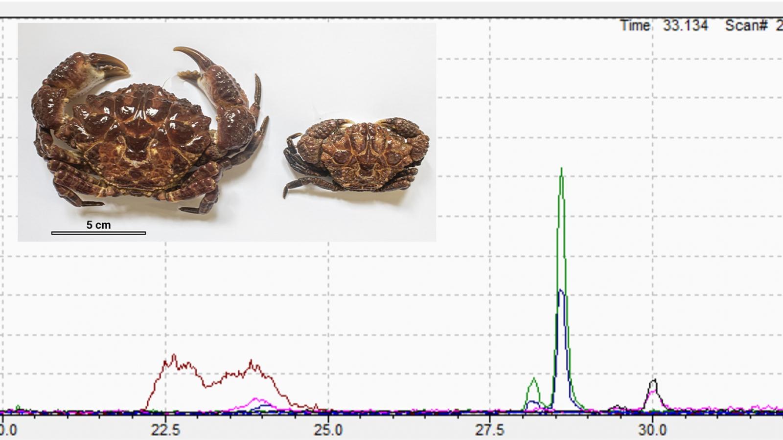 Xác định được độc tố trong mẫu vật cua biển gây ngộ độc tại ThanhHóa