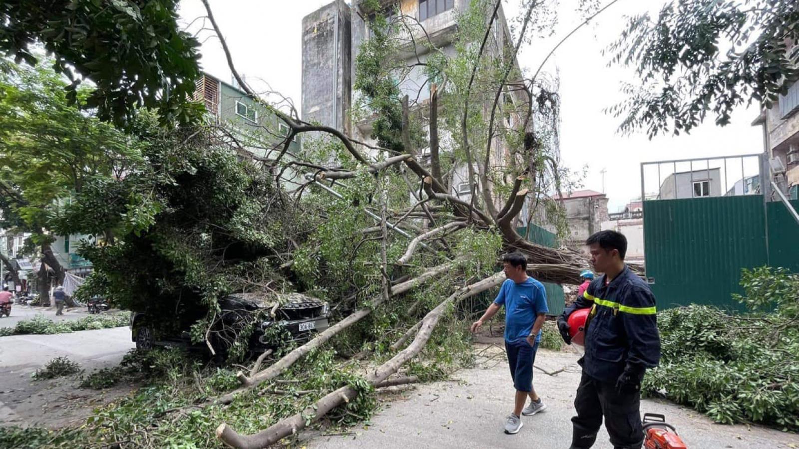 Không mưa gió nhưng cây vẫn đổ đè lên ô tô đang đi trên phố ở Hà Nội