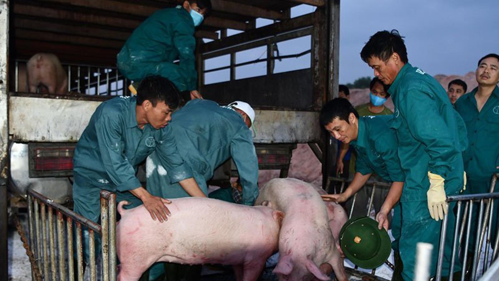 Tạm ngừng nhập khẩu lợn sống của Thái Lan từ 30/6