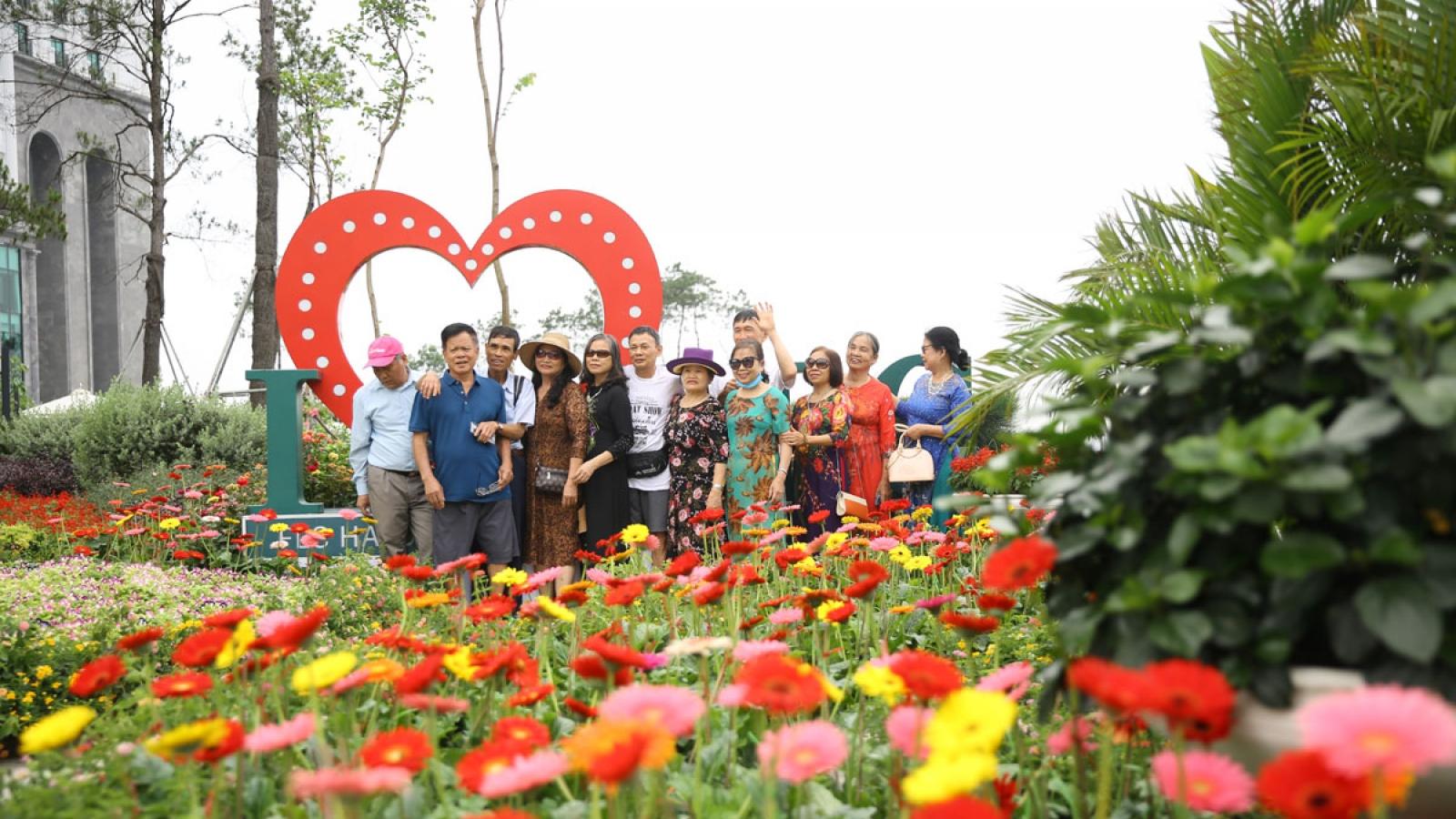 Cận cảnh thiên đường hoa rực rỡ trên đồi cao khiến du khách mê mẩn tại Hạ Long