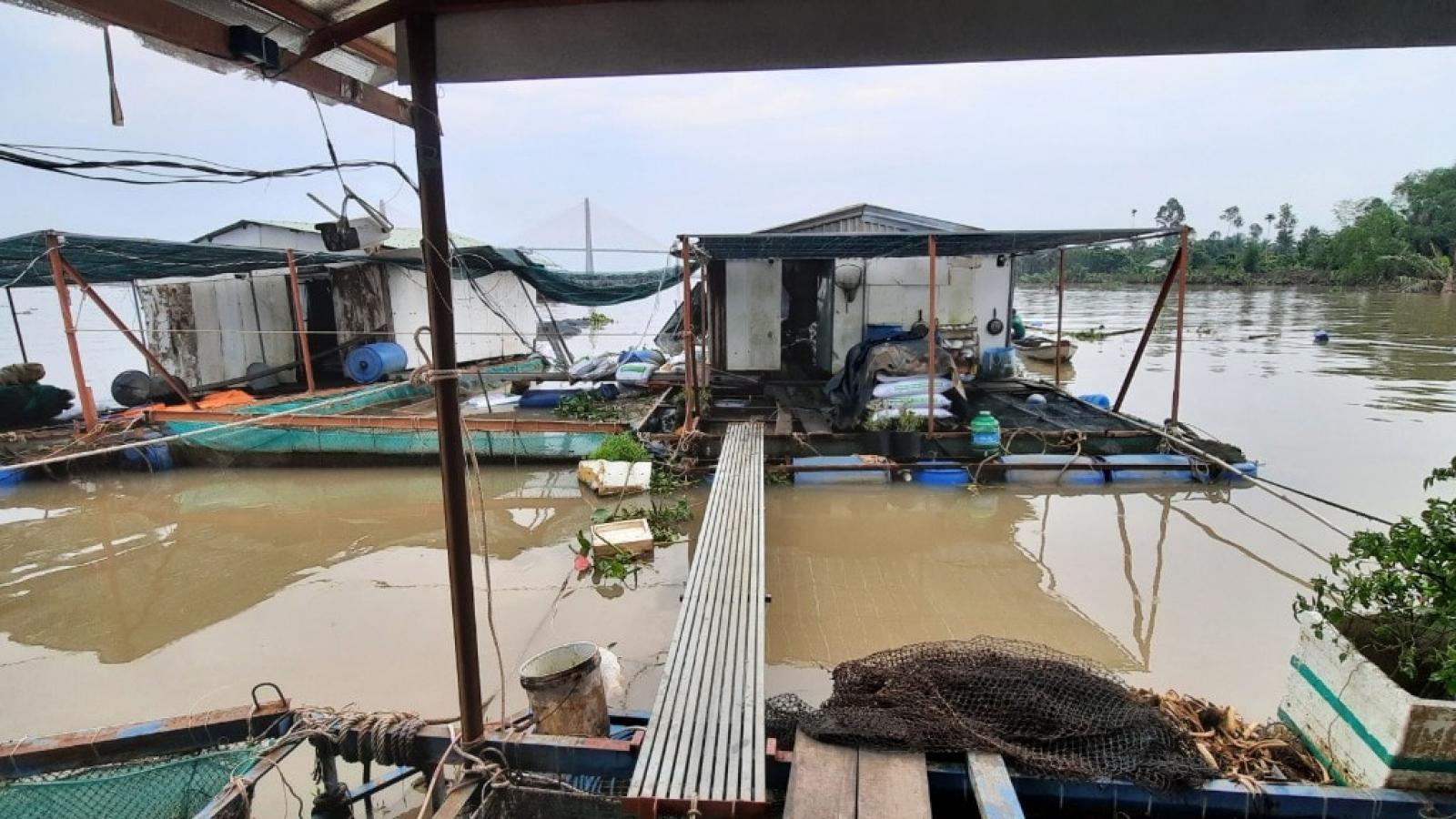 Tiền Giang:Điều tra vụ tàu chở container tông vào bè cá làm 12 tấn cá thoát ra sông Tiền