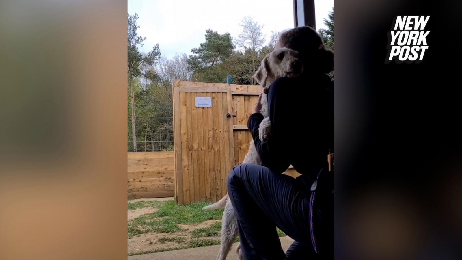 Video: Chú chó ôm chầm lấy người chăm sóc mới sau khi phải sống gần 6 năm trong thùng