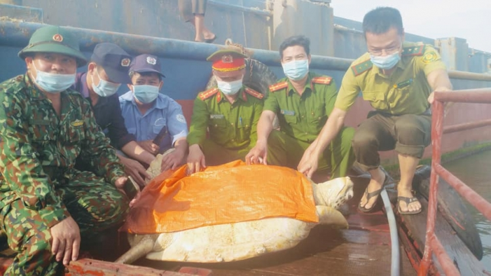 Thả cá thể rùa quý hiếm nặng hơn 80kg về với biển