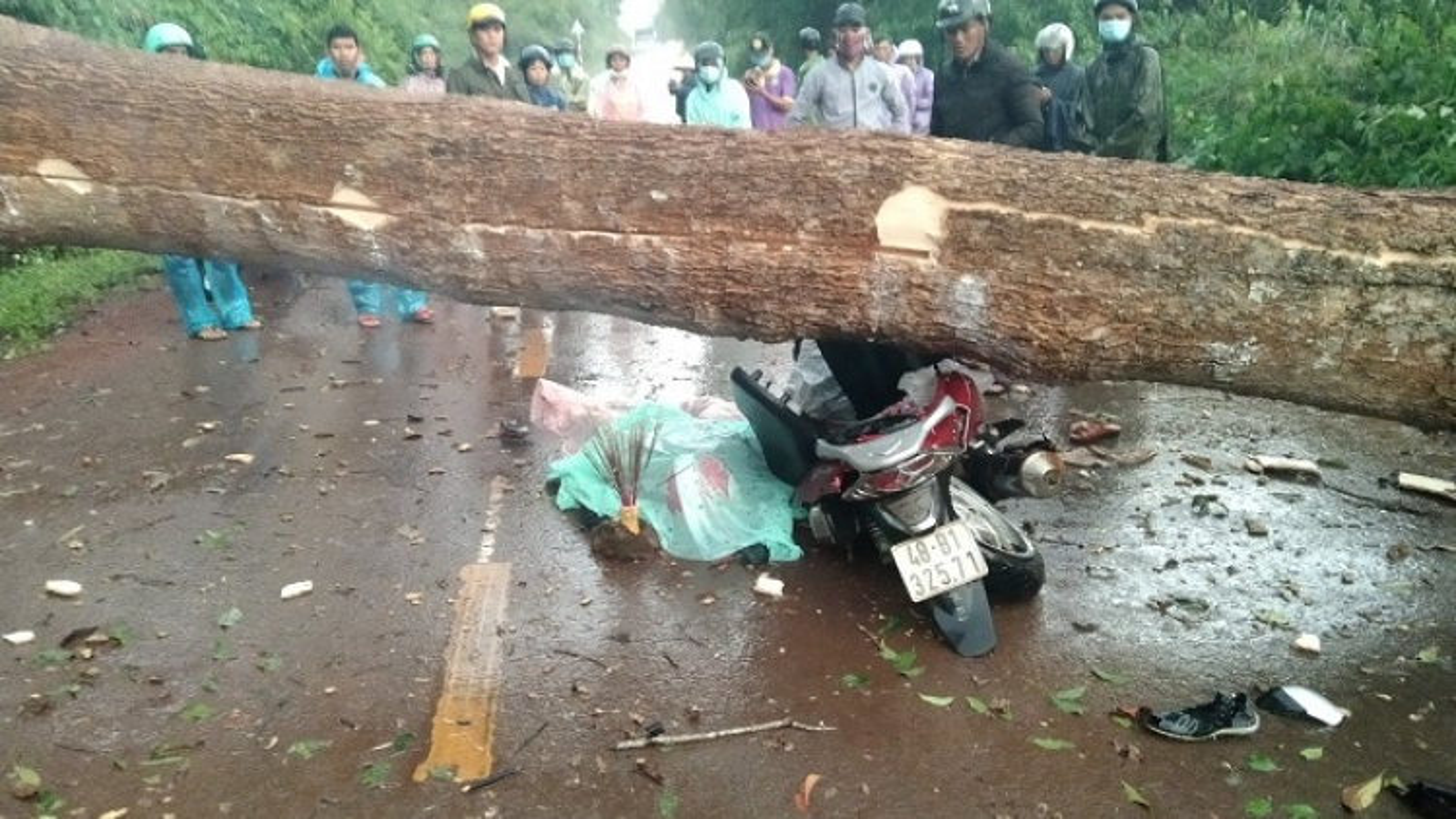 Cây rừng đổ ngang đường ở Đắk Nông khiến 2 người thương vong
