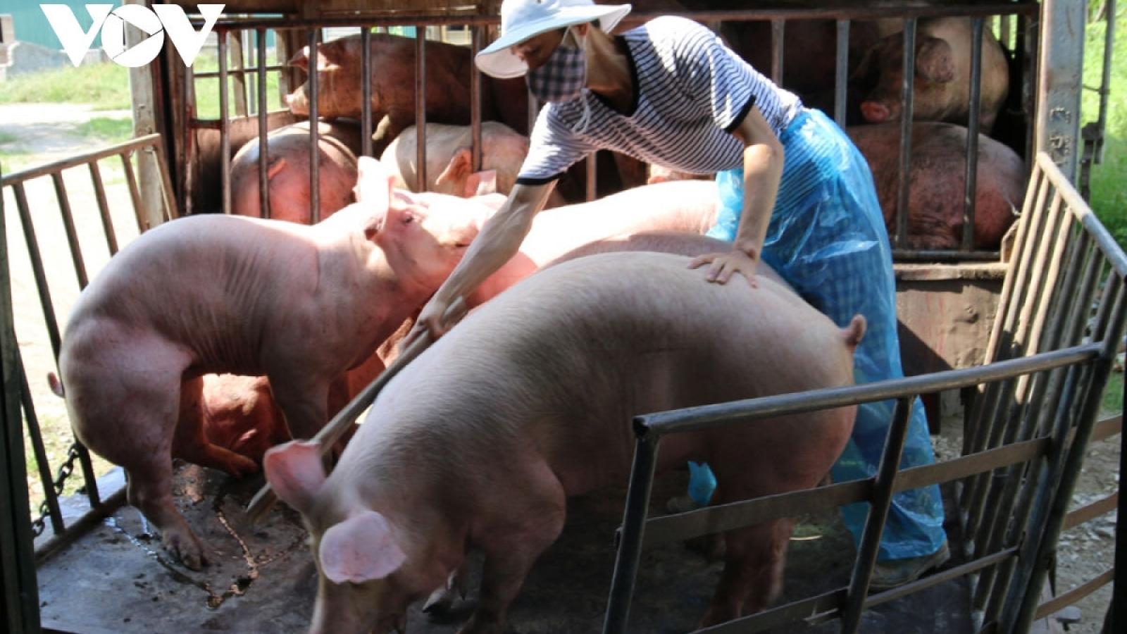 Giảm 50% mức thu phí trong chăn nuôi