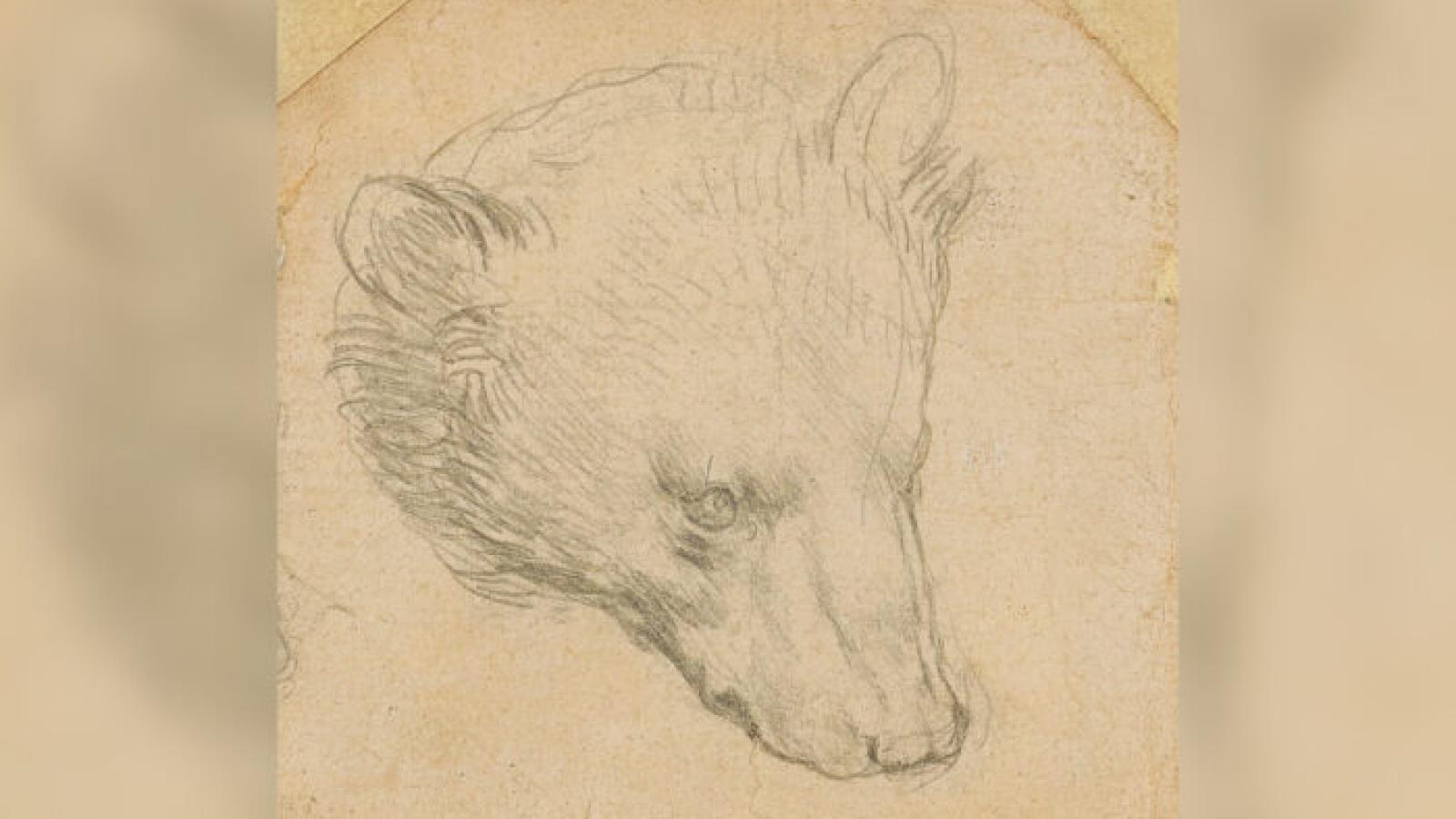 """Bức phác họa """"Đầu gấu"""" của Leonardo Da Vinci sắp được rao bán với mức giá kỷ lục"""