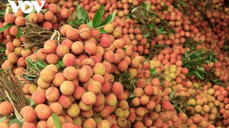 Nearly 200 Chinese dealers allowed to enter and purchase lychees